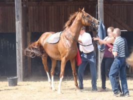 Saddle up a race horse by LuDa-Stock