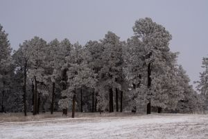 Black Forest Burn Scar with Snow by RoguePriest1287