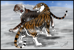 Tiger Fight by TussenSessan