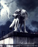 Wolf in Stormy Weather by Rochaluarts