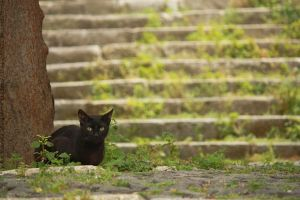 Cat and the Stairs by Ilman-Lintu