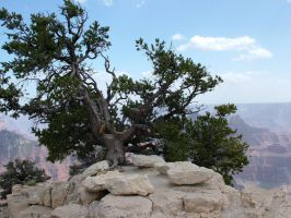 Grand Canyon 2 by todds201