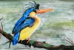 Malachite kingfisher by Purpledragongirl