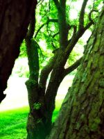 Home of the Dryad by VividThorn