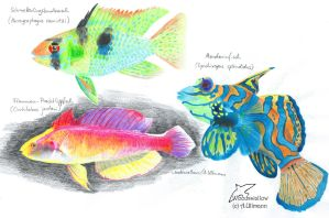Colours of the reef by Woodswallow