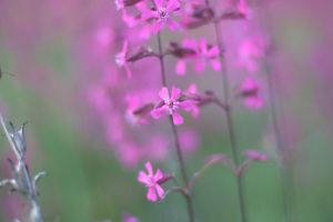 Delicate flowers by Molot