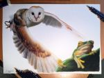 Owl/ Frog Color Pencil Drawing by AtomiccircuS