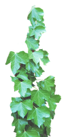 Ivy PNG.. by Alz-Stock-and-Art