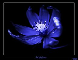 Nightflower by Misiael