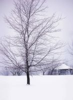 Winter Tree by MLeighS