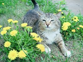 Dandelions and a cat by Mahou-tyan