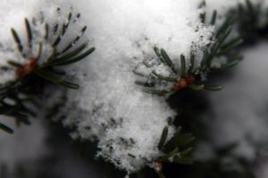 Snowy Pine Needles by Nebey