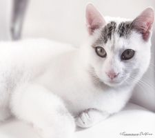 Toffy 1 by FrancescaDelfino