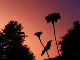 A flower silhouette by iJustRodeYourBicycle