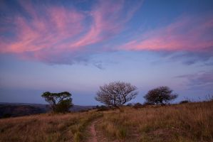 Three Trees and some pink sky by carlosthe