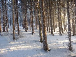 winterforest III by mimose-stock