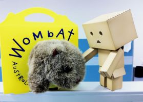 Danbo found a wombat in a box by amormimosse