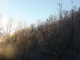 Cold Kentucky Morning by Morna