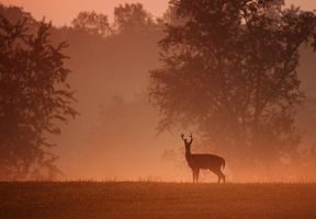 September Morning by jmarie1210
