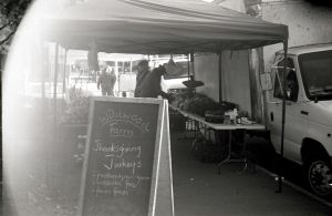 Farmers Market - Thanksgiving Turkey's by rdungan1918