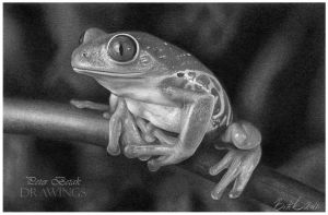 Frog drawing by petbet1