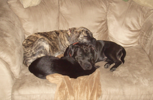 Dogs and Cat Napping Together by JenniBee