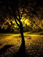 the Lonely tree at night by heaveninmyarms