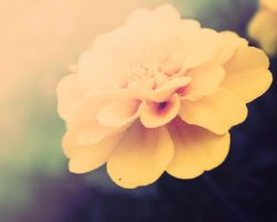 yellow marigold by MidnightDaisyStudio