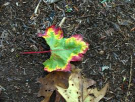Psychedelic Leaf by abuseofstock