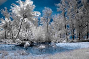 Infrared Palms by Tschisi