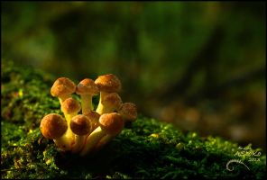 Orange Mushrooms 2 by AStoKo