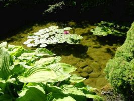 Lilly Pads Flowers Water Stock by Daturaemo