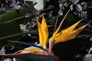 Bird of Paradise by jswis