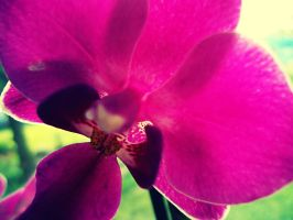 The Purple Orchid by llWickedll