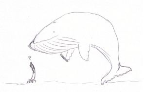 assassin whales by rabidminimoose