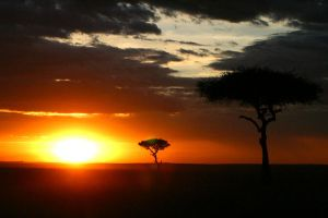 Acacia trees at sunset by TimBakerFX