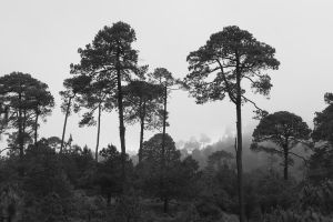 bosque de niebla by samo19