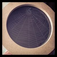 Preserved Spider Web by Nakwada