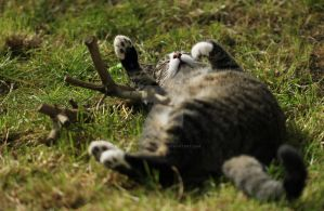 fallen asleep while playing... by clochartist-photo