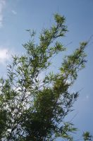 Bamboo and Sky by industrialstudios