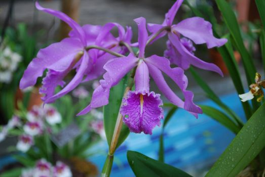 national orchid show 2012.1 by not-so-cute