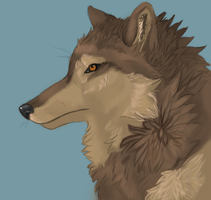 Toboe Wolf WIP by Akadafeathers