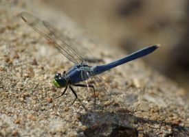 Dragonfly by Gooiool