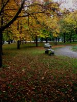 Autumn in the park by MASYON