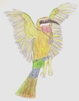 RH: Sunshine the White-Fronted Bee-Eater by Proceleon