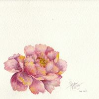 Peony by Jinnger