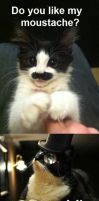 Mustache Cat! by RetardedAndProud