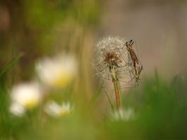 daddy-long-legs by Bodghia