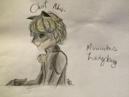 Chat Noir is Bae - Miraculous Ladybug by AusieOtterPie
