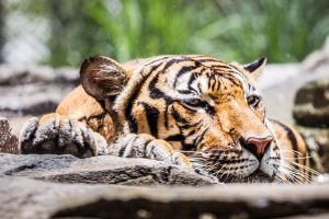 Nap time by 904PhotoPhactory
